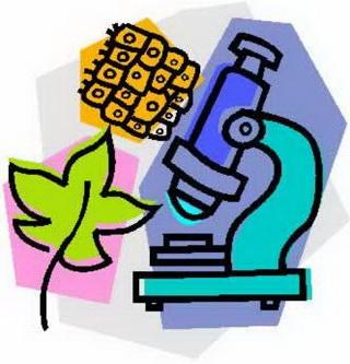 Биология – это наука о живой природе.