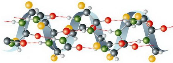Аминокислоты – это органические соединения.